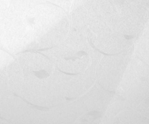 Р206 Белый Вьюн